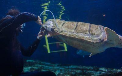 3d štampane proteze spasiće morsku kornjaču